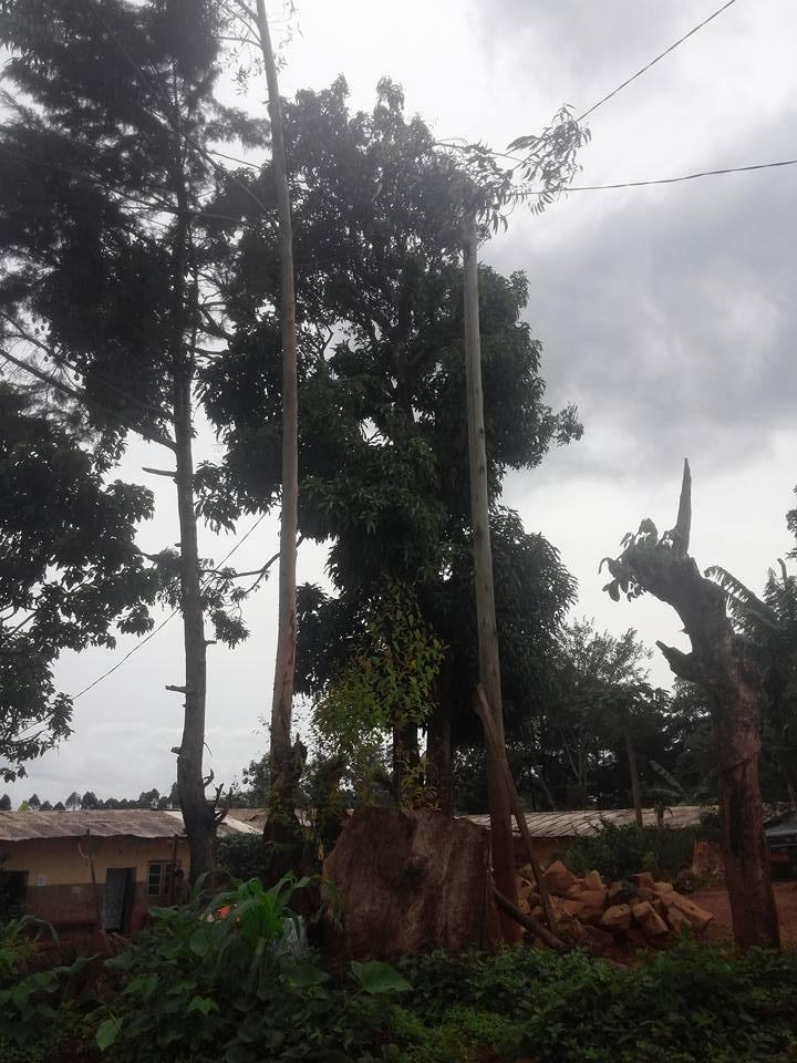 Photo of Teen Girl Dies In Bamenda After Falling Off Mango Tree