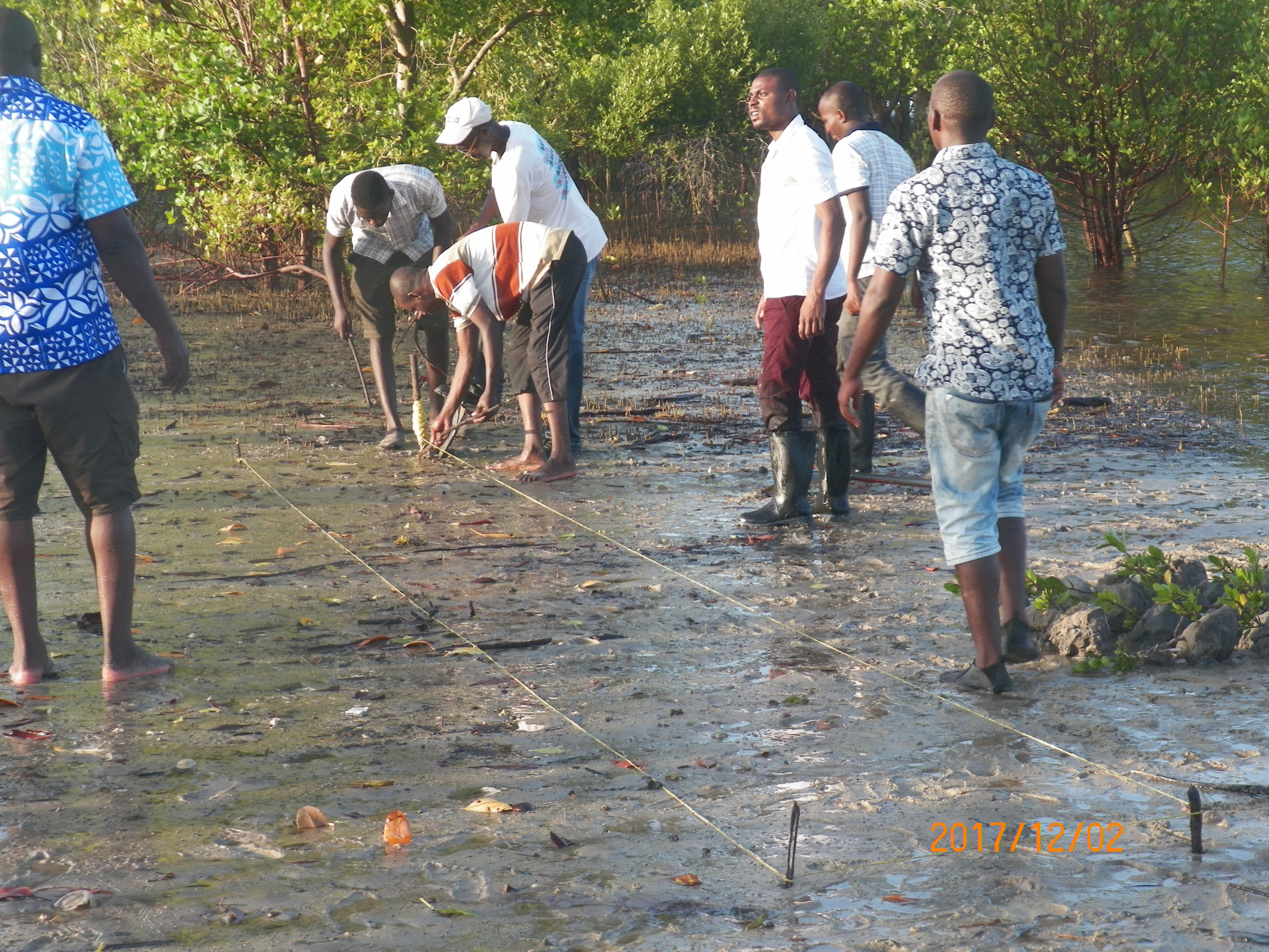 Photo of Expansion Of Mangrove Restoration Provide Coastal Kenyans Multiple Income  Sources,Fights Climate Change
