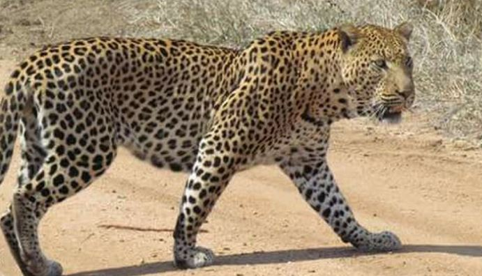 Photo of Toddler, 3, is Snatched and Eaten By Leopard at Safari Park in Uganda