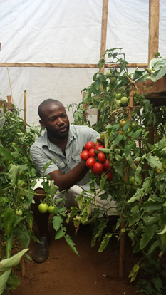 Greenhouse Farming In Cameroon Reduces Climate Change Brunt